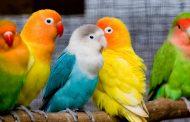 طراحی خانه پرندگان