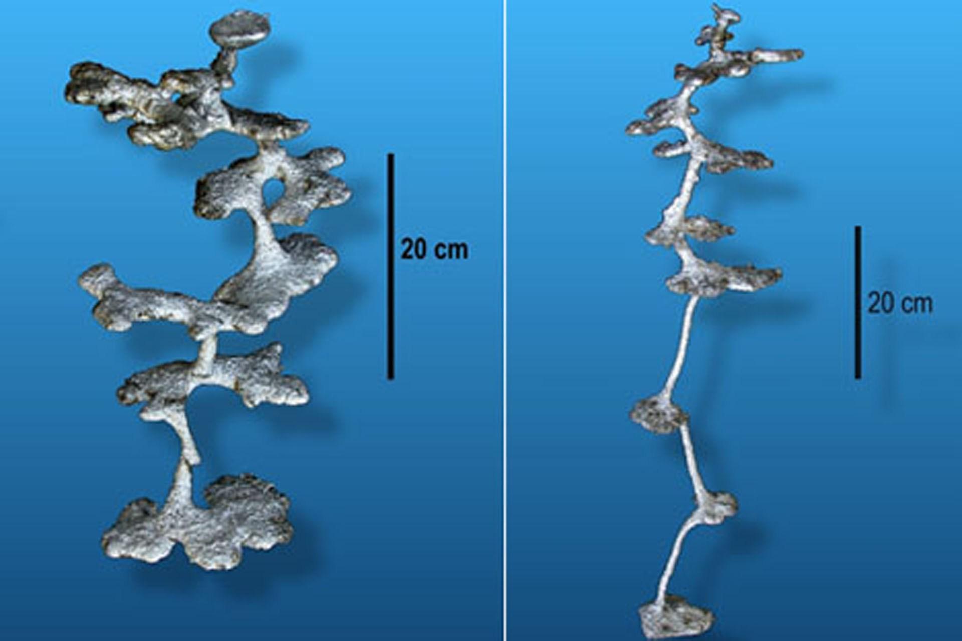 بررسی فرم لانه سازی موریانه ها - Evaluation form of termite nest